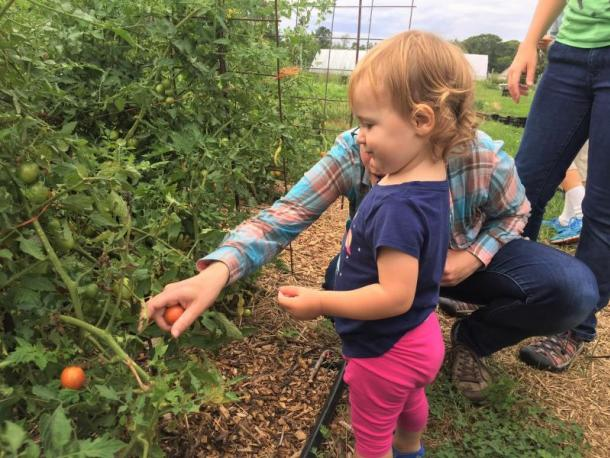One-year-old Sydney Gonzalez-Shwartz picks tomatoes with her mother Pam Shwartz during the tour. Photo by: Kate Robinson