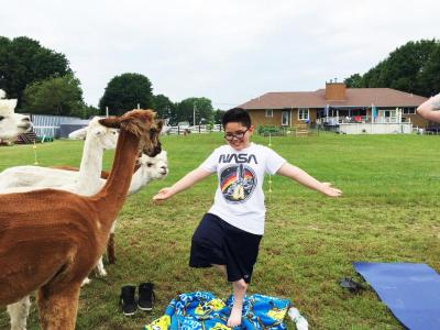Nine-year-old Bryce Costa tries to keep his balance while giving alpaca treats
