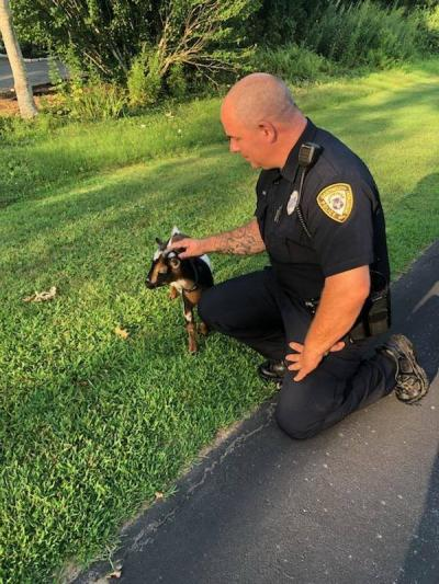 Officer Canario pats Marshmallow safely on the side of the road. Photo courtesy: Dartmouth Police Department
