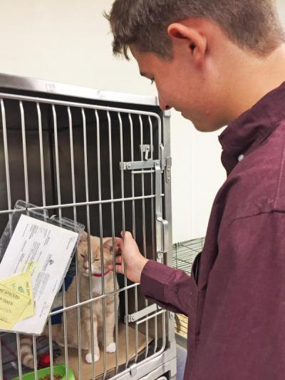 Dylan Marshall of Dartmouth scratches Morticia behind the ears. Morticia also has two kittens in the shelter.