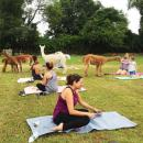 People snapped photos with the animals before and after the yoga session